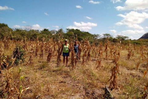 A Secretaria de Desenvolvimento Agropecuário de Quixeramobim está finalizando a etapa de vistoria nas áreas dos 100 agricultores beneficiários que aderiram ao programa Garantia Safra 2018