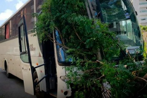 Ônibus desgovernado atinge prédio, bate em poste e derruba árvore na Aldeota