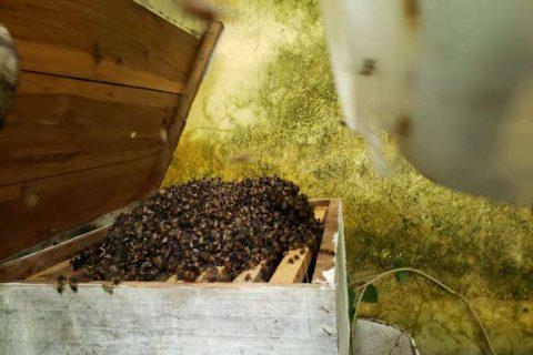 CBMCE realiza técnica de resgate e promove criação de abelhas em Canindé